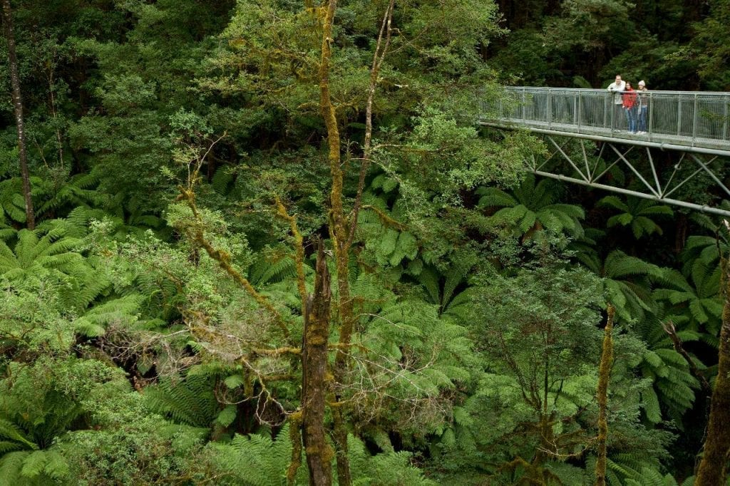 Treetop_Walk__View_from_walkway_lg